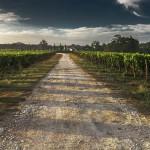Strada del Vino e dei Sapori Colli di Maremma